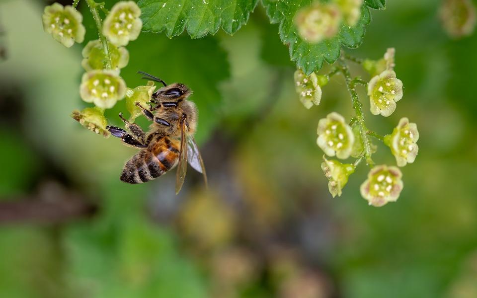 Sådan slipper du af med bier og hvepse i boligen